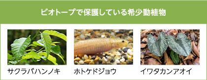 ビオトープで保護している希少動植物 サクラバハンノキ ホトケドジョウ イワタカンアオイ