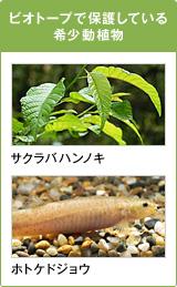 ビオトープで保護している希少動植物 サクラバハンノキ ホトケドジョウ